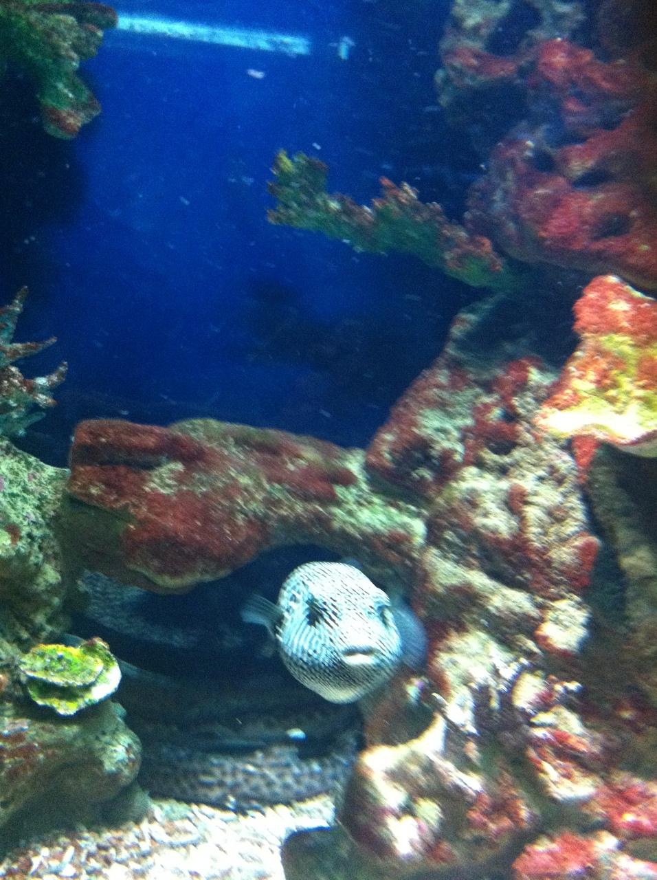 Пухлая рыба