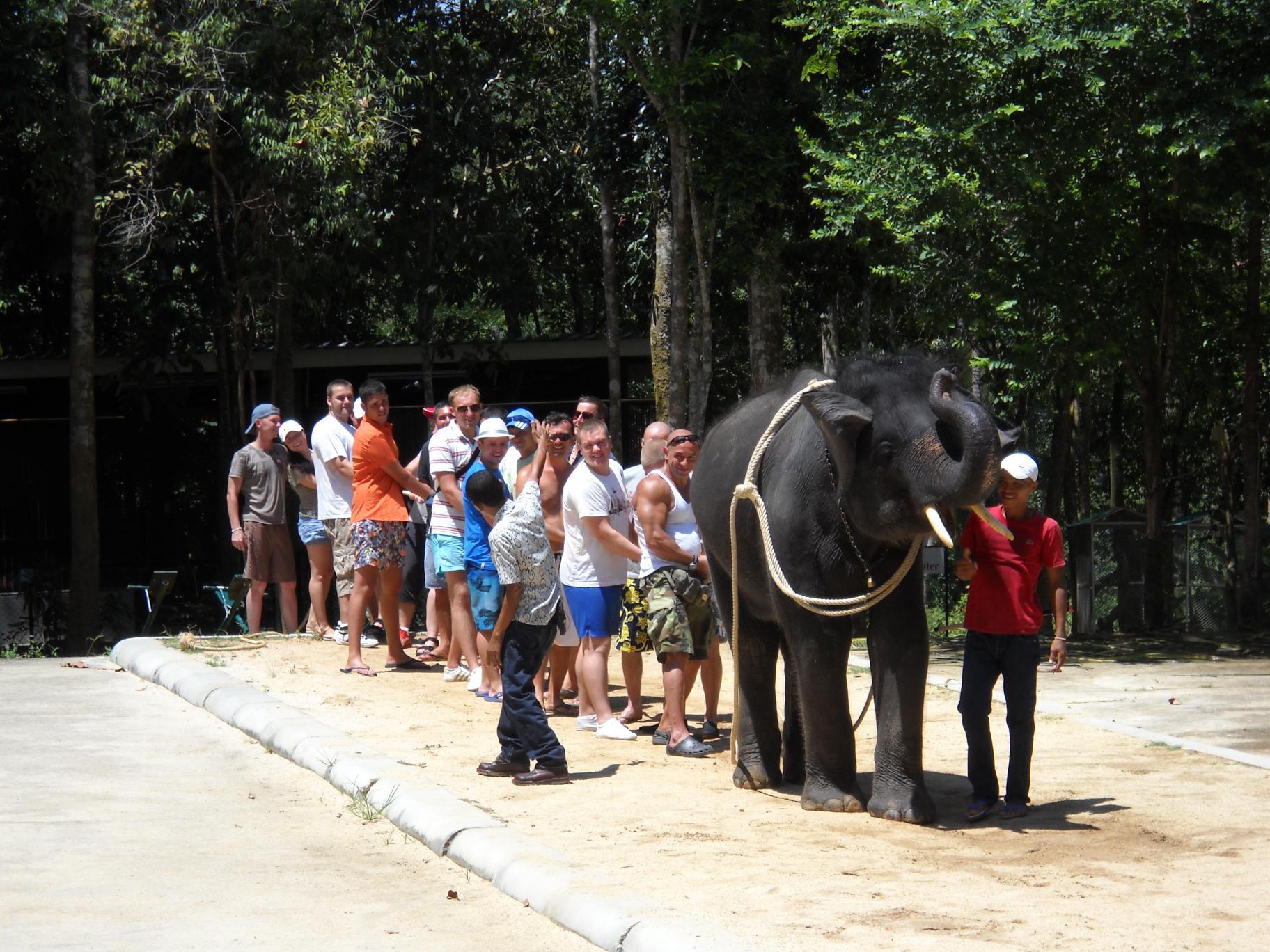 Слон против Вина Дизеля