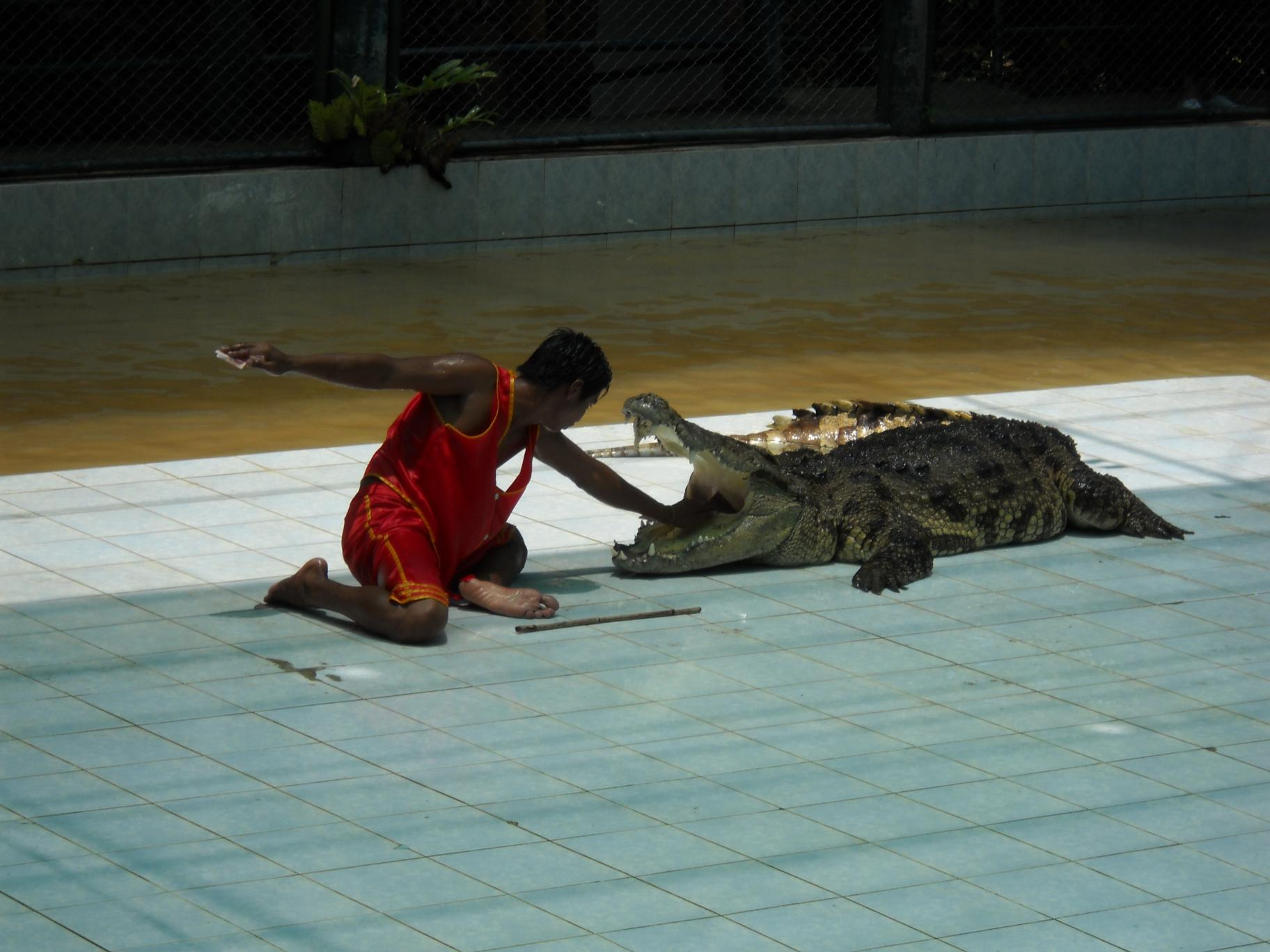 Как крокодилу гланды удаляли