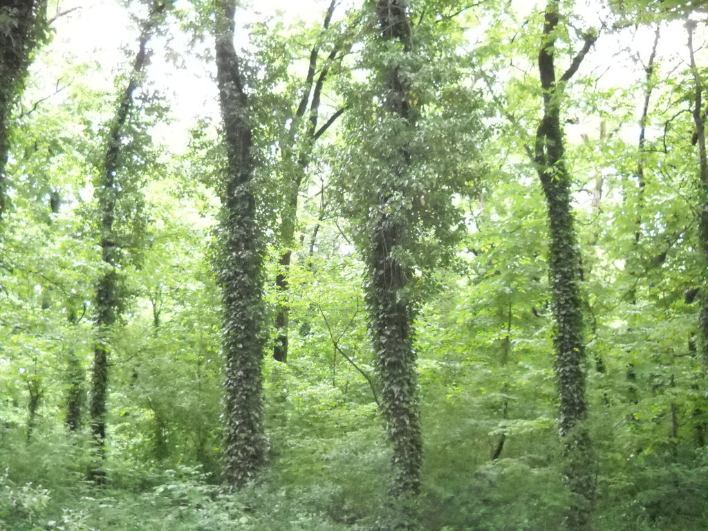 Волосатые деревья