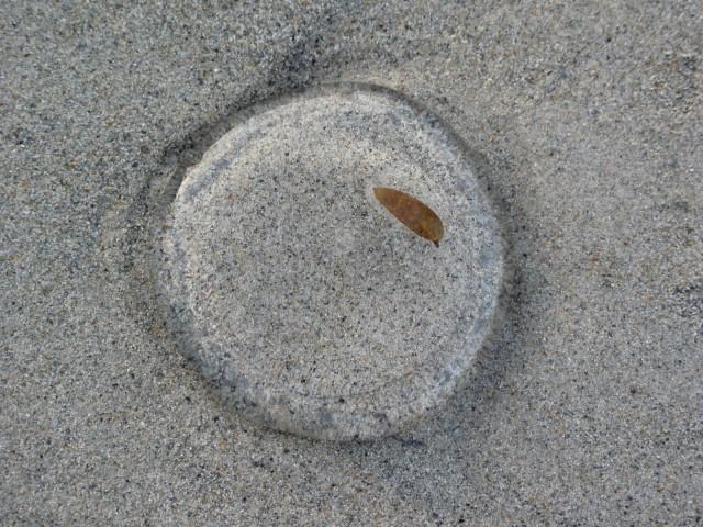 Медуза на песке