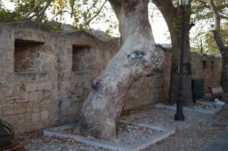 Глазастое дерево