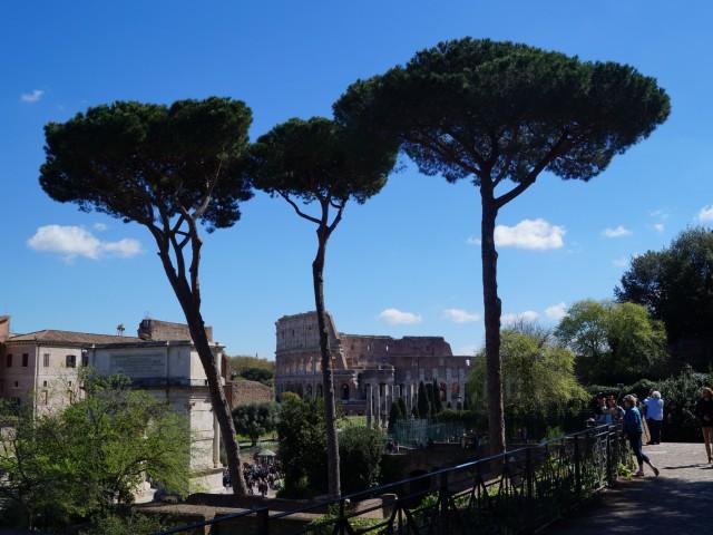 Сосны и Колизей